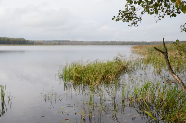 イグナリナ原発の温排水が捨てられていたドゥルークシュ湖。ビサギナス原発も建設されることになればこの湖を利用することになる。閉鎖水域の生態系に影響が及ぶ。=写真:諏訪撮影=